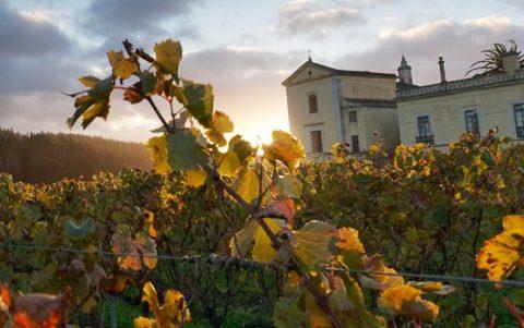 Quinta vineyard